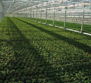 Agro plynový ohřívač vzduchu - skleník